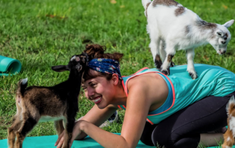 Namaste With Goats