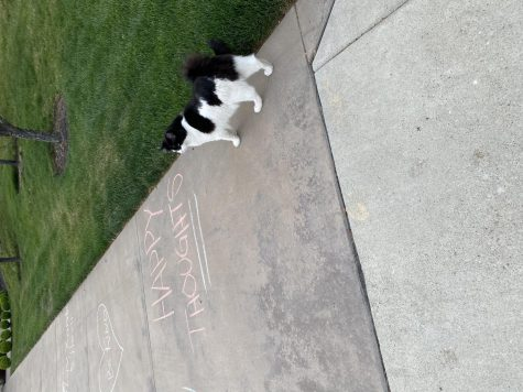Sidewalk chalk with positive messages cover sidewalks of Somerset streets in Boise, amid quarentine